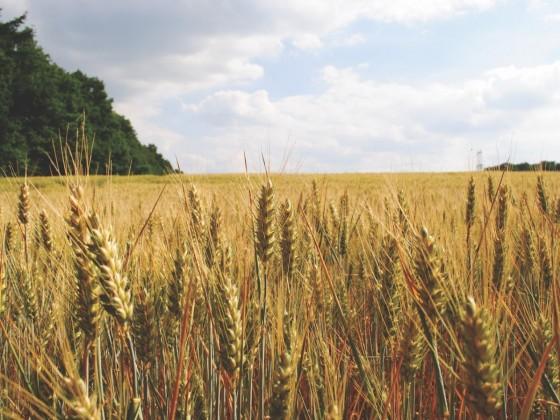 Manitoba Ag Days showcases province's agribusiness strength